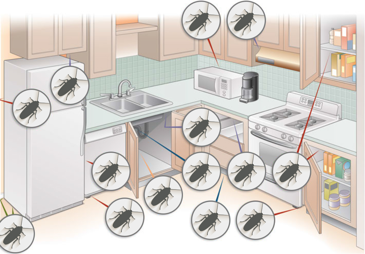 I Have Roaches In My Kitchen - Kitchen Appliances Tips And Review