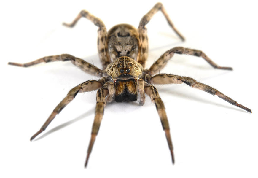 picture of spider #11