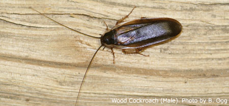how to get rid of tree roaches in your house