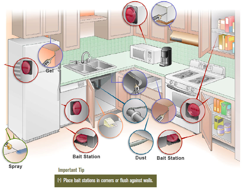 Bait placement guide for the kitchen