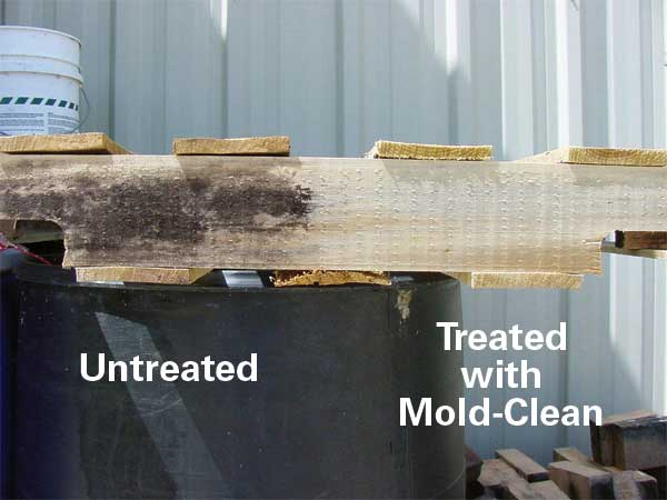Mold clean treatment