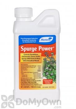 Monterey Spurge Power