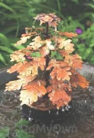Ancient Graffiti Oak Leaf Solid Copper Bird Bath Dripper (AG940LF)