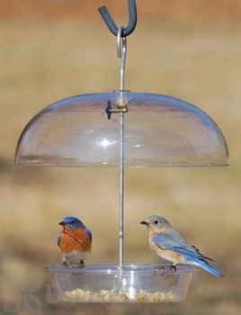 Aspects Vista - Dome Bird Feeder (278)