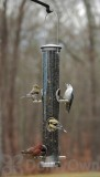 Aspects Seed Tube Brushed Nickel Quick Clean Base Bird Seed Feeder Large (393)