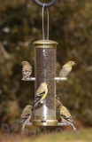 Aspects Thistle Tube Antique Brass Quick Clean Base Bird Seed Feeder (401)