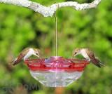 Aspects HummBlossom Bird Feeder - Rose 4 oz. (433)