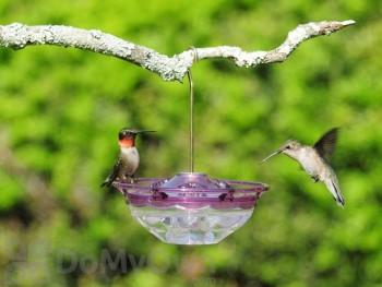 Aspects HummBlossom Bird Feeder - Plum 4 oz. (434)