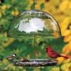 Droll Yankees Dorothy Bird Seed Feeder (DCF)