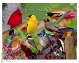 Impact Photographics Backyard Birds Print Cleaning Cloth (IMP52130CLC)