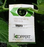 Koppert En-Strip (Encarsia formosa)