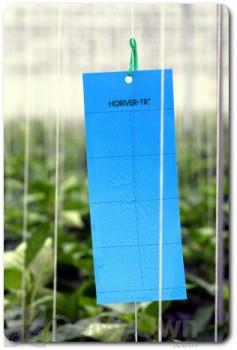 Koppert Horiver-TR  Small Blue Trap