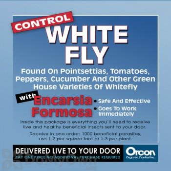 Orcon Control White Fly Encarsia Formosa (1000 eggs) (EF-C1000)