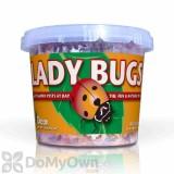 Orcon Ladybugs