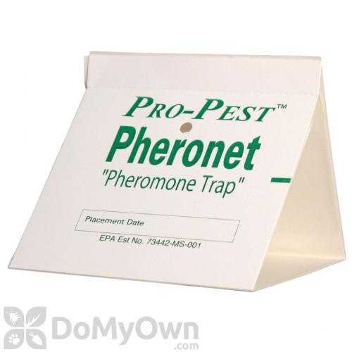 flour moth pantry pest trap pantry pest pheromone glue trap