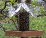 Songbird Essentials Recycled Poly Deluxe Yumbrella Bird Feeder 72 oz. (SE527)