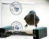 Songbird Essentials Mini Green Window Bird Feeder (SE536)