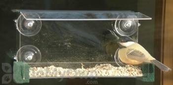Songbird Essentials Open Diner Window Bird Feeder (SE541)