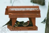 Songbird Essentials Fly Through Barn Bird Feeder (SE555)