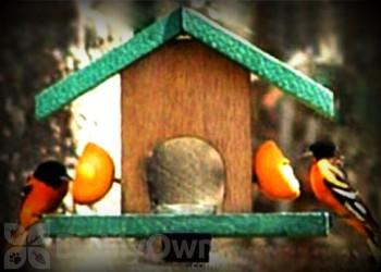 Songbird Essentials Cedar Oriole Feeder (SE561)