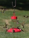 Songbird Essentials  Dr. JB All Red Clean Hummingbird Feeder 16 oz. (SE6002)