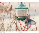 Songbird Essentials Green Clingers Only Bird Feeder (SE7012)