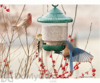 Songbird Essentials Green Clingers Only Bird Feeder (SE7012)