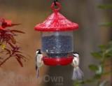 Songbird Essentials Red Clingers Only Bird Feeder (SE7013)