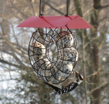 Songbird Essentials Red Roof Round Wire Circle Suet Ball Bird Feeder (SE908)