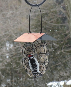 Songbird Essentials Copper Roof Round Wire Circle Suet Ball Bird Feeder (SE909)