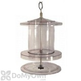Songbird Essentials Clear All Weather Bird Feeder 4 Qt. (SEAWFFF734)