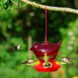 Songbird Essentials Red Bird Hummingbird Feeder 12 oz. (SEBCO312)