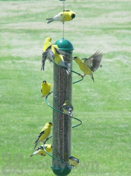 Songbird Essentials Green Spiral Finch Tube Feeder 17 in. (SEBQSBF2G)