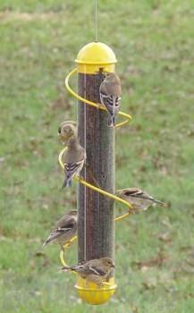 Songbird Essentials Yellow Spiral Finch Tube Bird Feeder 17 in. (SEBQSBF2Y)