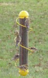 Songbird Essentials Yellow Spiral Finch Tube Bird Feeder 17 in. (SEBQSBF2Y)
