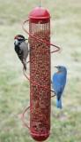 Songbird Essentials Red Peanut Bird Feeder 2 lbs. (SEBQSBF4R)