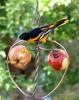 Songbird Essentials Johnny Apple Bird Feeder (SEHHAPPL)