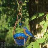 Songbird Essentials Copper Bluebird Mealworm Feeder (SEHHBBMW)