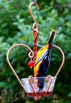 Songbird Essentials Love Birds Jelly Bird Feeder (SEHHLBJL)
