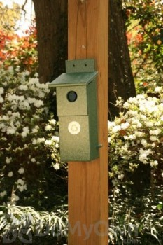 Songbird Essentials Hunter Green Nesting Box (SERUBBB100)
