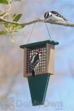 Songbird Essentials Suet Bird Feeder with Tail Prop (SERUBSF100H)