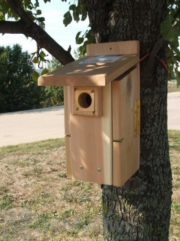 Songbird Essentials Ultimate Bluebird House (SESCS3004RW)