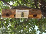 Songbird Essentials Upside Down Suet Log Bird Feeder (SESCS407)