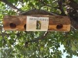 Songbird Essentials Upside Down Suet Log Bird Feeder (SESCS407)
