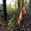 Tenax Pet Fence Premium