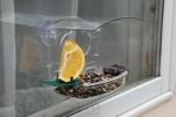 Woodlink Window Treat Bird Feeder (NAWFDR)