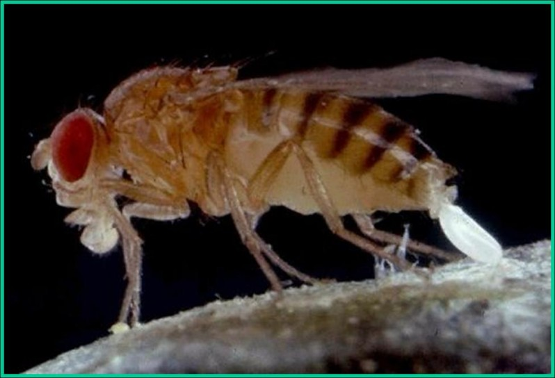 how to kill fruit flies at home