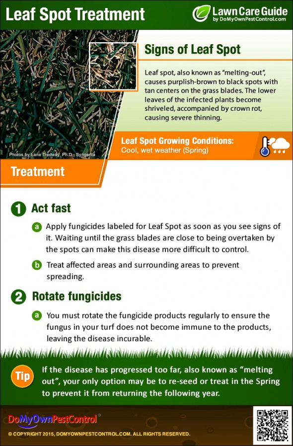 how to get rid of leaf spots