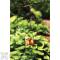 Ancient Graffiti Hanging Fruit Bird Feeder Spear Flower (87112)