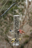 Aspects Seed Tube Brushed Nickel Quick Clean Base Bird Seed Feeder Medium (392)